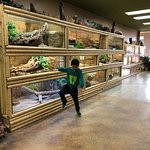 Photo of The Reptile Zoo