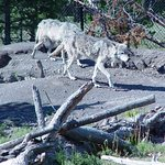Montana Grizzly Encounter Φωτογραφία