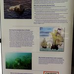 about the manatees