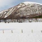 Photo of Arctic Explorers Tromso