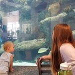 صورة فوتوغرافية لـ ABQ BioPark Aquarium