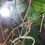 Photo de Butterfly Park & Insect Kingdom