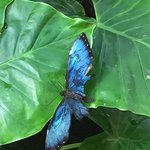 One of many beautiful butterflies at the Key West Butterfly Conservatory.
