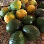 Papayas and avocados from Shais garden