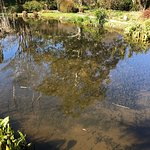 Billede af Mount Usher Gardens