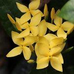 Photo de Moorea Tropical Garden