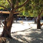 Photo de Zoofari
