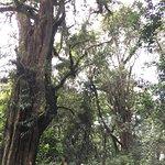 Forest photos