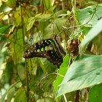 صورة فوتوغرافية لـ The Butterfly and Orchid Garden