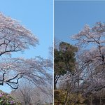 Foto Taman Istana Hachigata