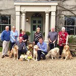 The diners and their guide dogs.