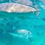 Photo of Ecologic Divers