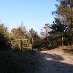 Area della pineta in prossimità della spiaggia