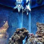 Photo de Aquarium Sea Life Paris Val D'Europe