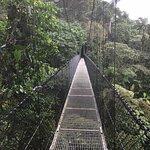 Foto de Arenal Hanging Bridges