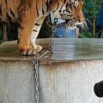 Φωτογραφία: Phuket Zoo