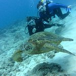diving with a turtle at Turtle Canyons