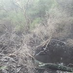 Photo de Tokaanu Thermal Pools