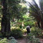 Palm trees at Mount Edgcumbe