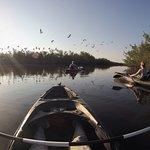 Foto de Tour The Glades - Private Wildlife Tours