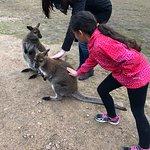 Φωτογραφία: Kangaroo Creek Farm