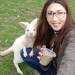 Friendly White Wallaby 😍😍😍😍