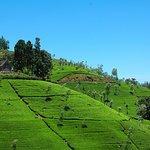 Hilly region filled with Sri Lanka's Tea Plantations