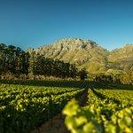 Simonsberg and Chardonnay view