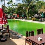La piscine verte et inutilisable... Dommage quand il fait 35 degrés !