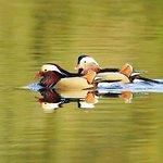 Bilde fra Kingfisher Trout Lake