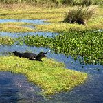 We saw caiman on all boat trips!
