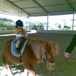 Pony ride for the little ones ...most enjoyable.