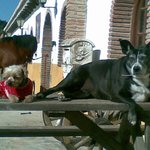 many friendly dogs ( and cats and other animals) are on the ground of the Finca