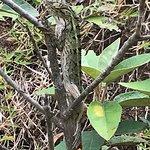 Photo of Ebony Forest Chamarel