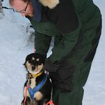 """Musher guide Ryan preparing 7 month old """"July"""" for her puppy training run."""