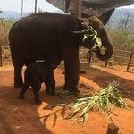 Der Elefantentreck war einfach spitze. Wir waren gefordert aber es waren die schönsten 10 Tage