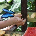 butterflies are fun!