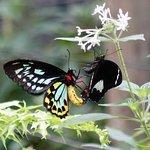 Australian Butterf;ly Sanctuary