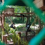 Foto de Colobus Conservation