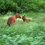 Bandipur National Park-jackals