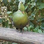 Birds of Eden Photo