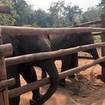 Photo of Elephant Village Sanctuary & Resort