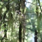 Rainforest Mid View