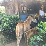 Foto de Haris'horses
