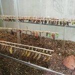 Schmetterlingshaus Foto