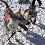 Valokuva: Era-Susi Huskies - Day Tours