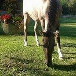 Donkey Ranch