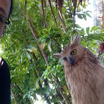 Me and the owl