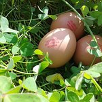 Free range fresh eggs from Naxos
