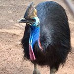 Cassowary; fun to feed grapes to